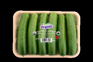 Cucumber 6 pack